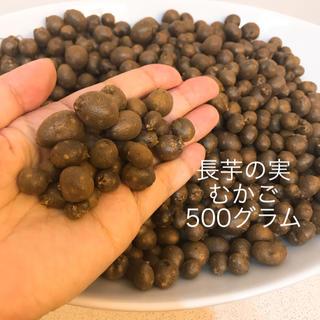 北海道十勝産 長芋の実 むかご 500グラム