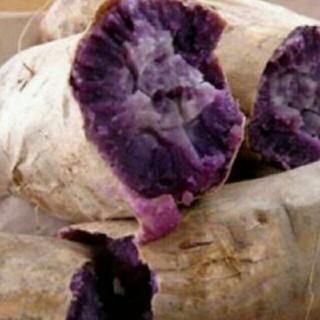 込1キロ 無農薬 紫イモ(野菜)