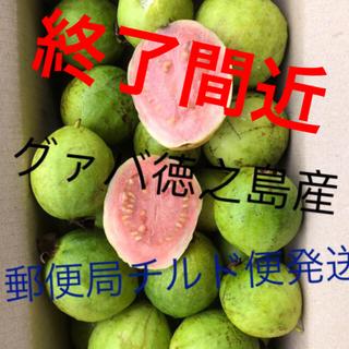 もぎたてグァバ1キロ1800円特別特価好評品(フルーツ)