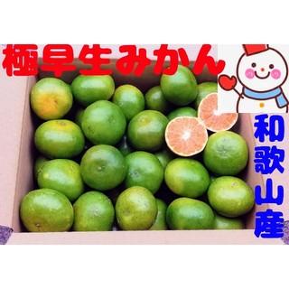 和歌山の極早生みかん❤️小粒たっぷり❤️雪だるま自家栽培