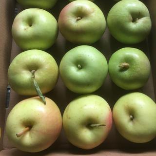 小さいながら味自慢!青森県産りんご トキ 4,5キロ