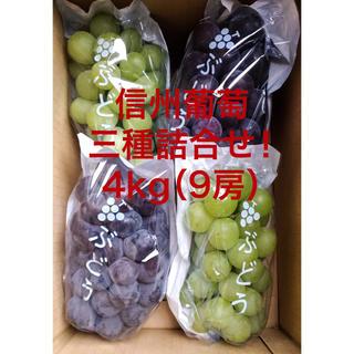 信州葡萄詰合せ 巨峰 黄甘 ピオーネ 種無し 4kg(9房) ブドウ ぶどう