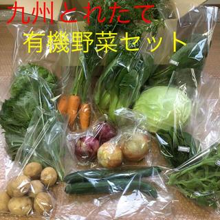 九州とれたて野菜セット