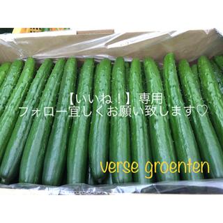 新鮮野菜10月末-11月初旬より予定  by...verse groenten