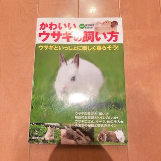 かわいいウサギの飼い方(趣味/スポーツ/実用)