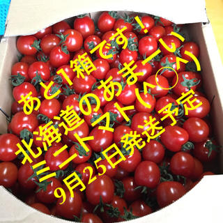 9月25日発送予定  北海道のおいし〜いミニトマト食べ比べセット(^○^)(野菜)