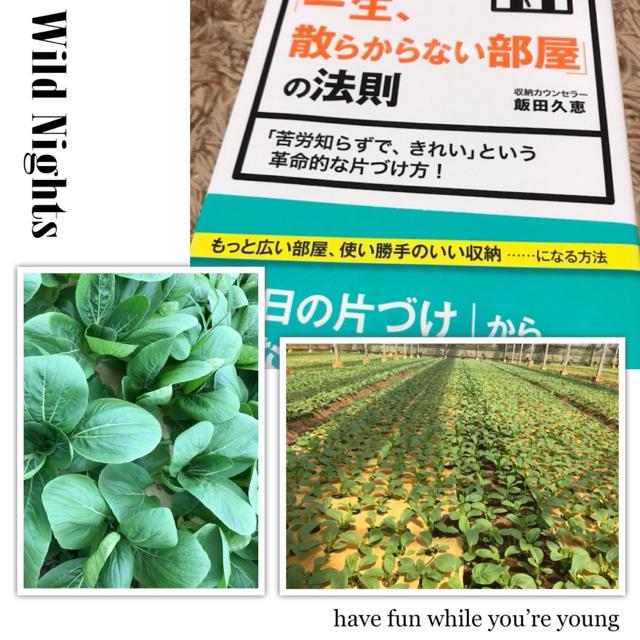 チンゲン菜&本セット 食品/飲料/酒の食品(野菜)の商品写真