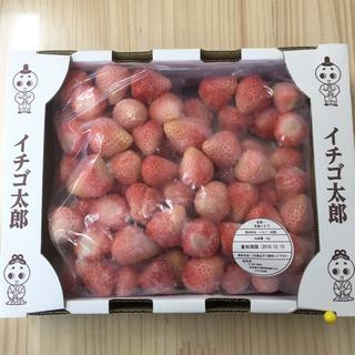 奈良県産 白苺 淡雪(ピンク) 冷凍いちご(フルーツ)