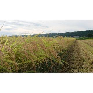 新米✨新潟米🍚食べ比べセット(米/穀物)