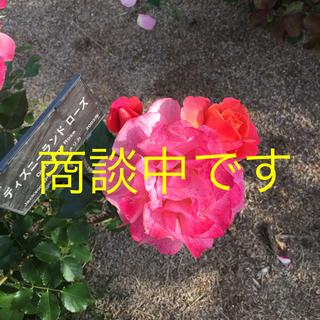 ダイアナ(DIANA)のbuhiiiさま☆ダイアナ  フラットパンプス(ハイヒール/パンプス)
