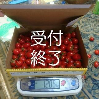 ★お客様コメント用★ ミニミニトマト(野菜)
