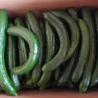 《hiromi様専用》訳ありキュウリ(7kg)(野菜)