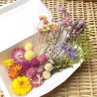 【増量します】ドライフラワー花材セット いろいろミックス ハーバリウムに♪(ドライフラワー)