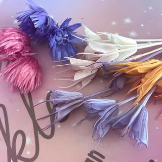 5色☆ニゲラと2色☆シルバーデージーミニセット(ドライフラワー)