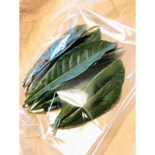 摘みたてビワの葉 無農薬30枚(茶)
