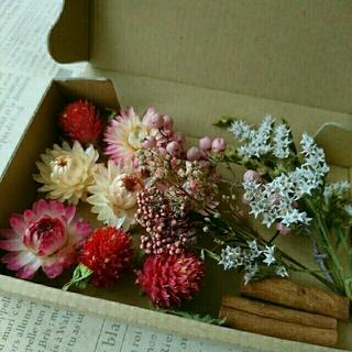 ドライフラワーの花材セット  シックピンク系 2(ドライフラワー)