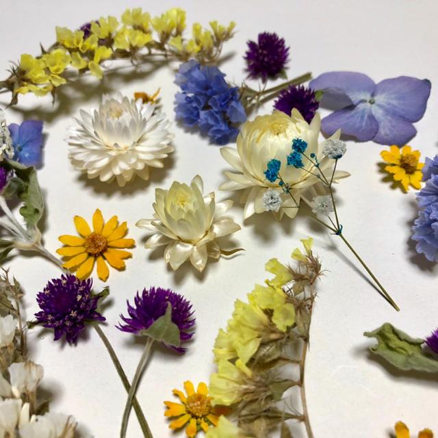 ドライフラワー 花材 セット  A-50 ハンドメイドのフラワー/ガーデン(ドライフラワー)の商品写真