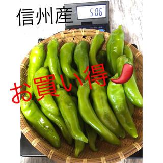 信州産 辛なんばん 青唐辛子(野菜)