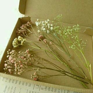 ドライフラワー  小花の花材セット(ドライフラワー)