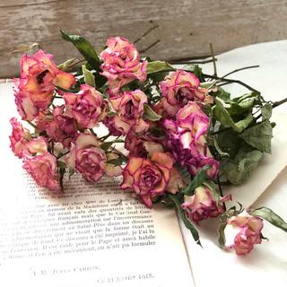 花材 ドライフラワー 薔薇(ドライフラワー)