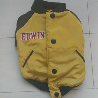 犬のジャケット