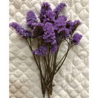 ドライフラワー スターチス 薄紫色(ネオブルー)(ドライフラワー)