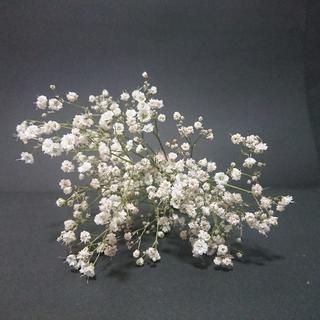 かすみ草ドライフラワー ナチュラルホワイト小 【花材】(ドライフラワー)