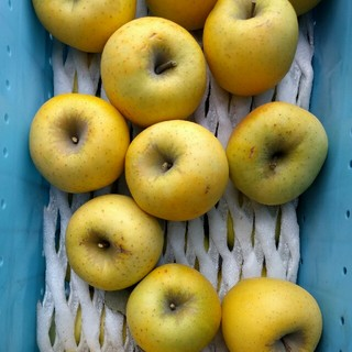 千曲農園 家庭用シナノゴールド 約10kg 信州産りんご(フルーツ)