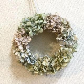 秋色紫陽花のドライリースパステルミックス(ドライフラワー)