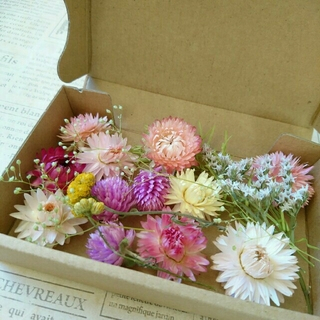 ドライフラワーの花材セット  ブライトピンク系(ドライフラワー)