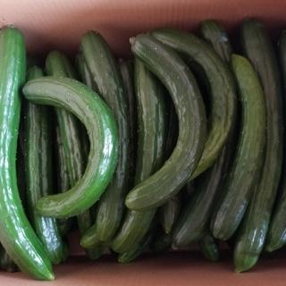訳ありキュウリかつ《規格外5kg》(野菜)
