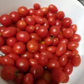ミニトマト アイコ(野菜)