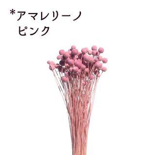 アマレリーノ ピンク 10本(ドライフラワー)