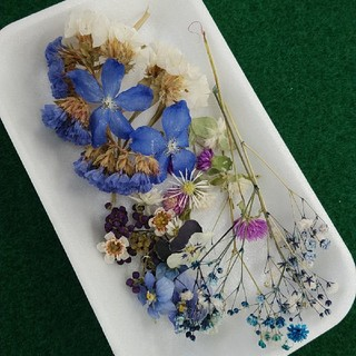 ニナちゃん様専用 花材45 ブルー系ドライフラワー レジン封入などに小花のセット(ドライフラワー)