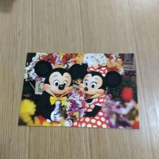 Disney - ディズニーワールド ミッキー&ミニー ポストカード