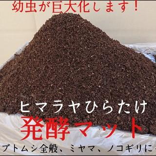 カブトムシ幼虫が大きくなります!ヒマラヤひらたけ発酵マット!栄養価抜群!産卵にも(虫類)