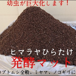 カブトムシ幼虫が大きくなります!ヒマラヤひらたけ発酵マット 栄養価抜群!産卵にも(虫類)