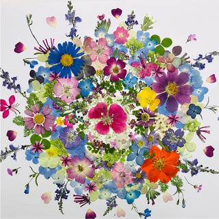 押し花☆ミニバラ、キバナコスモス、リナリア他小花たくさん 花材 おまけ付き