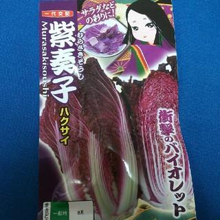 種 紫 白菜(野菜)