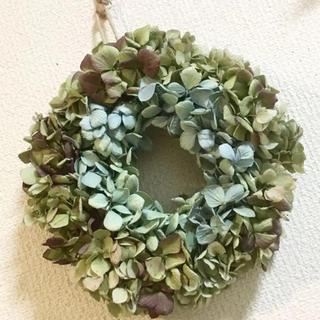 秋色紫陽花のドライリース、ワイン&ブルーグリーン(ドライフラワー)