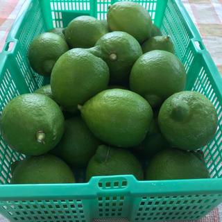 無農薬レモン(奈良県産) 1kg (9個〜11個)(フルーツ)