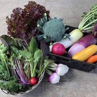 無農薬野菜 秋の味覚セット