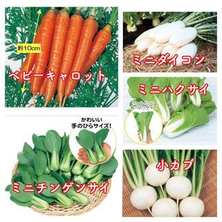 ミニやさいの種 5種類小分け(野菜)