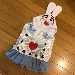 Disney - dハロ dハロウィン 仮装 白うさぎ 不思議の国のアリス 80センチ