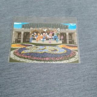 ディズニー(Disney)のディズニーリゾート 2008 25周年 ポストカード(その他)
