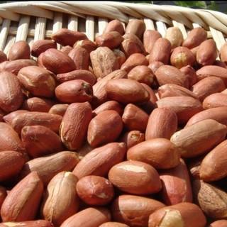 ◆新豆 千葉県八街産落花生1㌔◇最高品種 千葉半立 八街ピーナッツ(野菜)