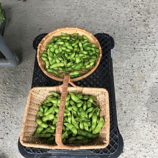 丹波黒豆の枝豆(野菜)