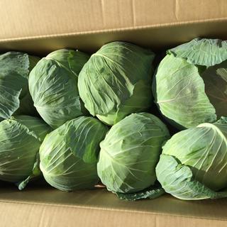 北海道  厚沢部産  キャベツ  10キロ以上(野菜)