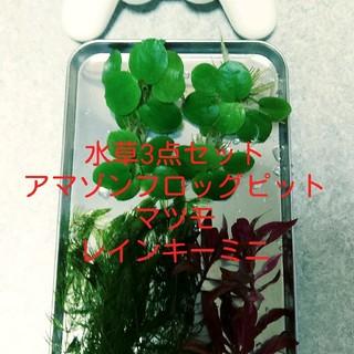 アクアデザインアマノ(Aqua Design Amano)の水草3種セット(アクアリウム)