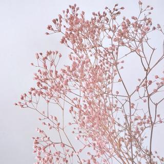 カスミ草 *パウダーローズ 大地農園(プリザーブドフラワー)